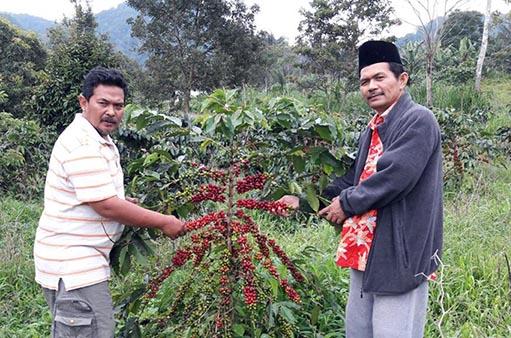 Kunjungan lahan ke petani jeruk dan petani kopi anggota SPI Sumatera Barat